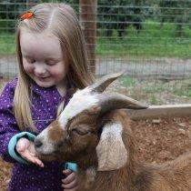 Alivia & Goat at AppleBarn