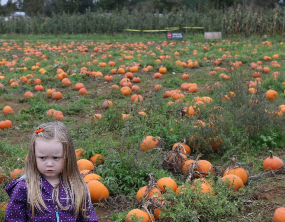Alivia Pumpkin Patch AppleBarn