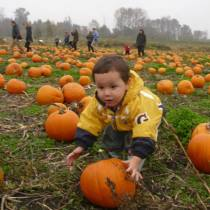 Wordless Wednesday Pumpkin Patch