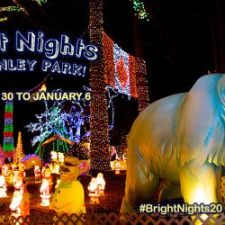 Bright Nights at Stanley Park