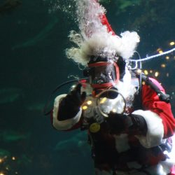Holiday Traditions at the Vancouver Aquarium { Scuba Claus }